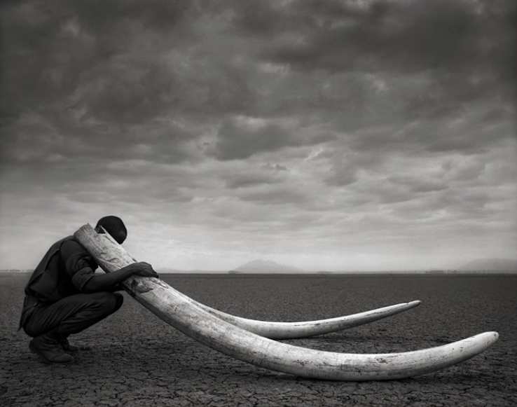 Nick Brandt Conserving