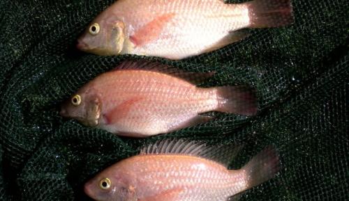 Container Fish Farming in Philippi  | The Incidental Tourist