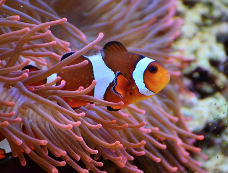 Clownfish Pimalai Resort & Spa