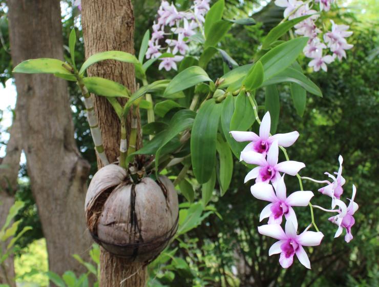 Tongsai Bay Garden