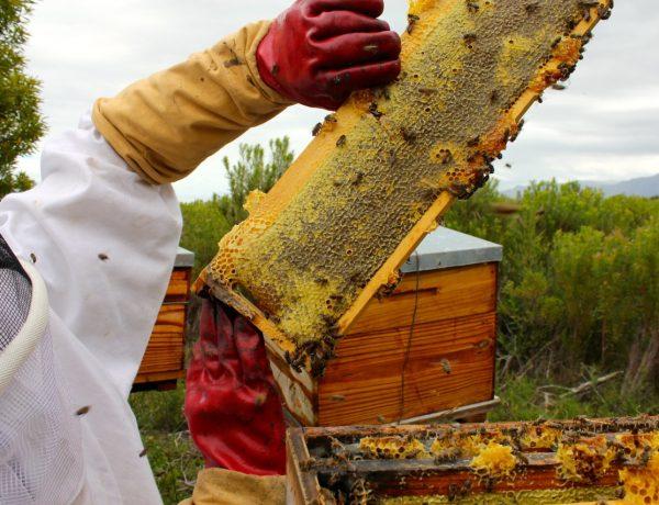 Grootbos Honey