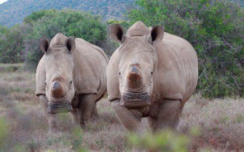 MyPlanet Rhino