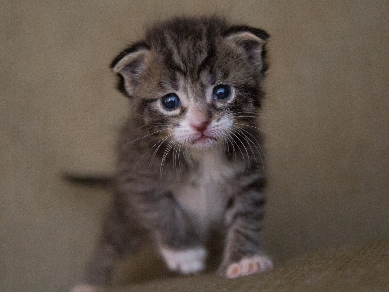Puppies And Kittens Are Cute But To Neuter Is Cuter