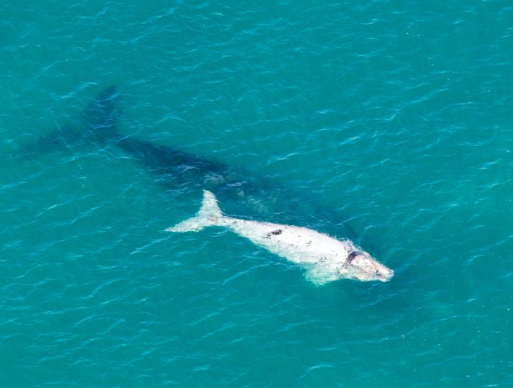 De Hoop Whales