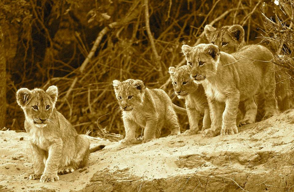 Trek for Lions